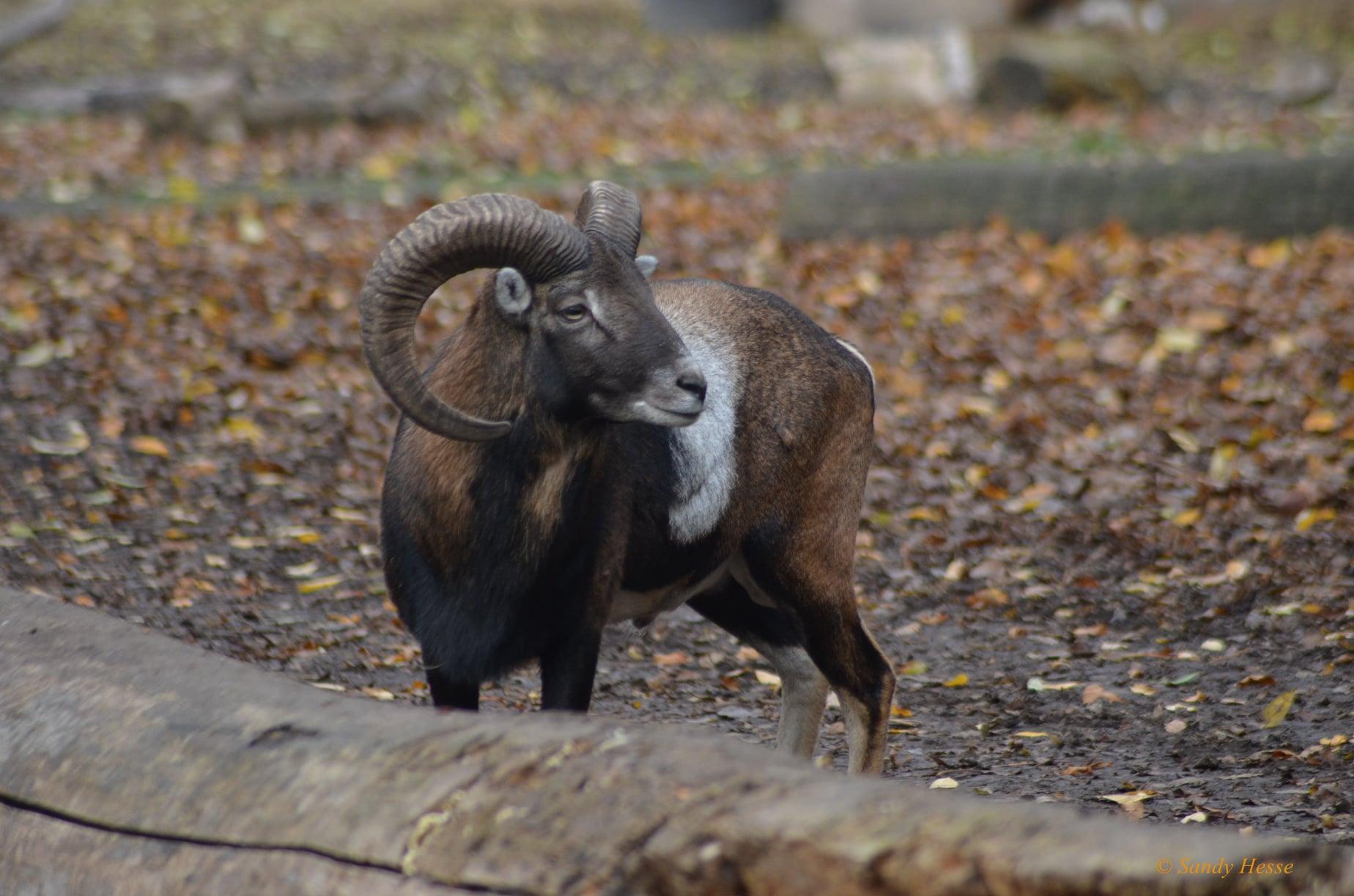 Tierparkführer