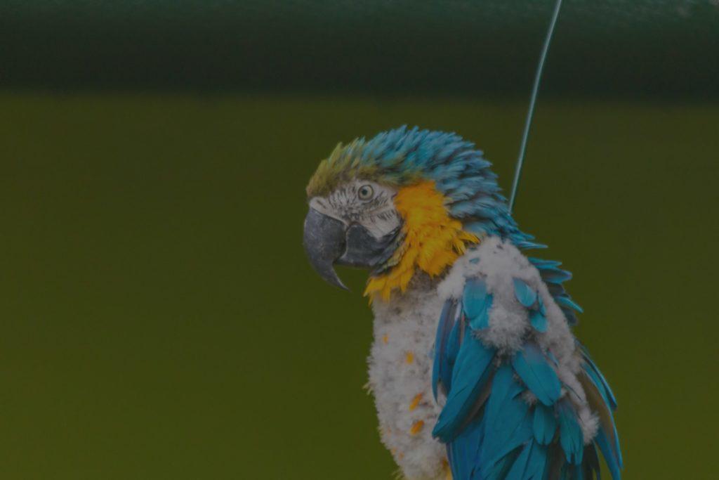 papagei1280p_web