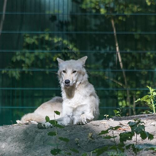 polarwoelfe_web